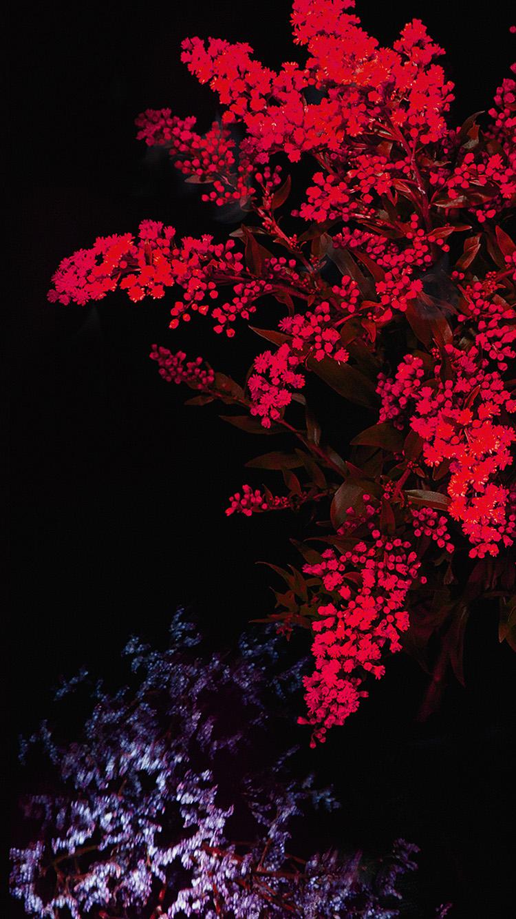 Dark Red Flowers Wallpaper Flowers Healthy