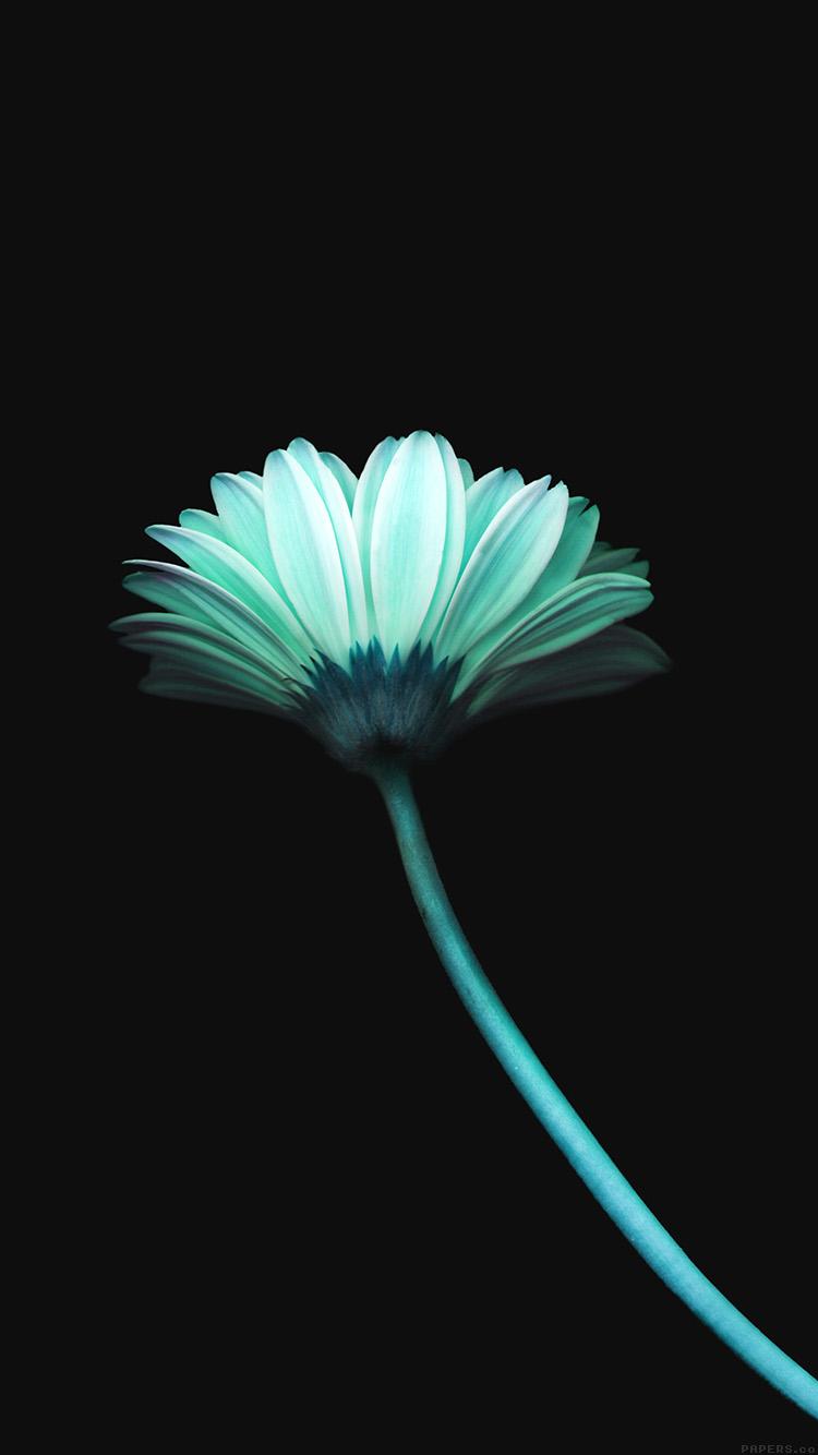 Dark Blue Flower Wallpaper Hd Ardusat Org
