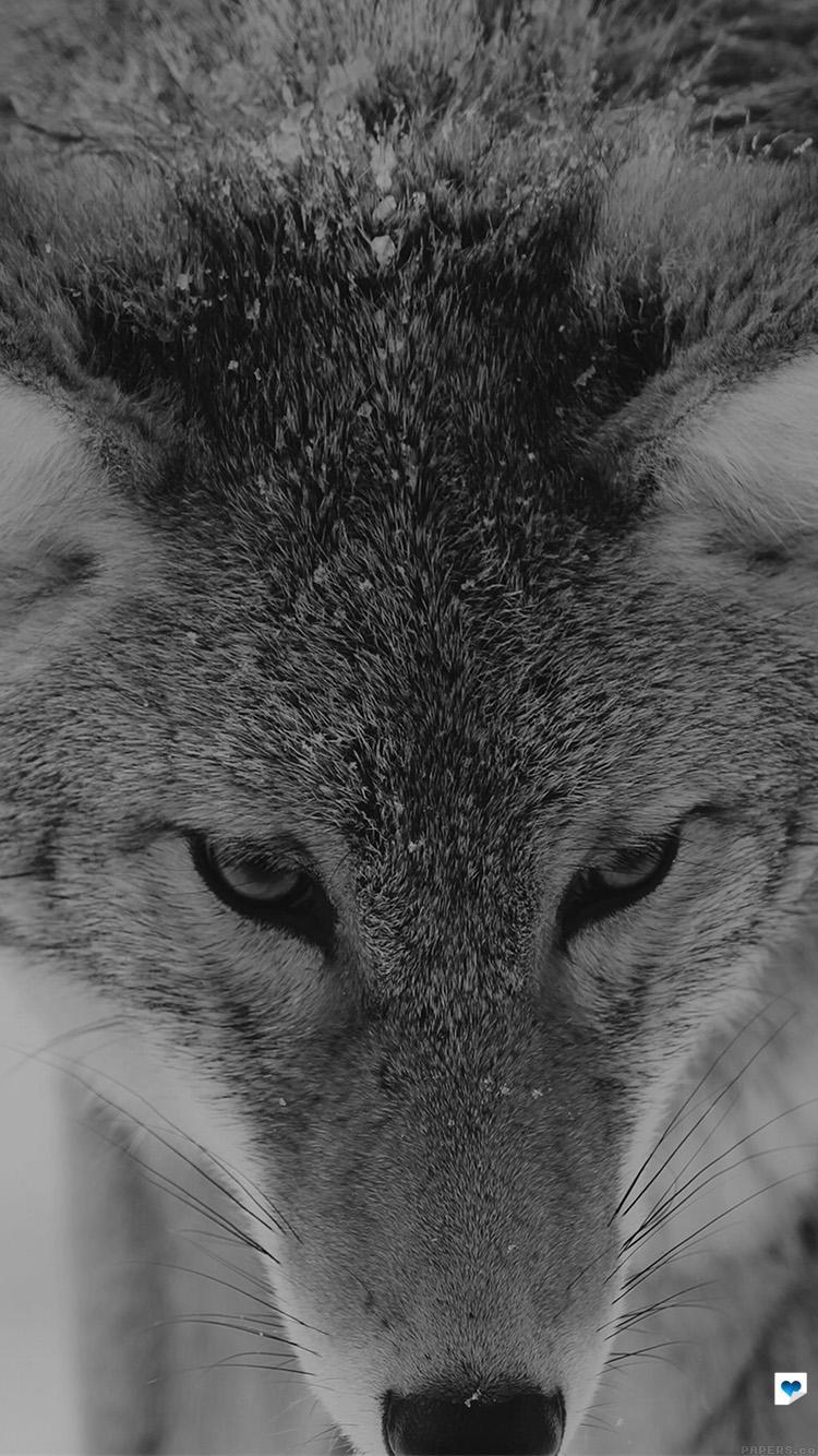 Iphone wallpaper tumblr wolf - Iphone Wallpaper Tumblr Wolf 42