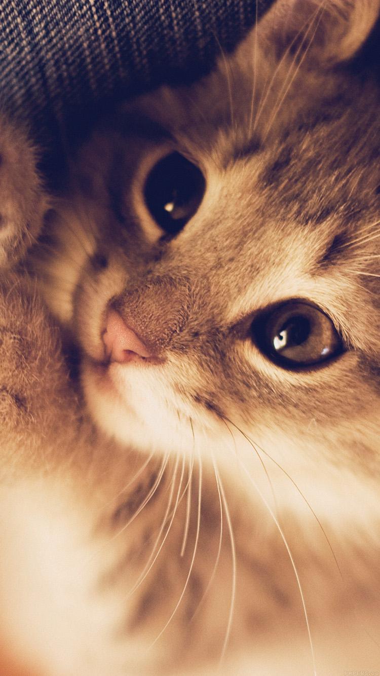 Iphone7papers Mq77 Cute Cat Kitten Nature Animal