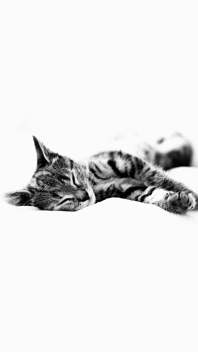 Iphone7papers Ms25 Sleepy Cat Kitten White Animal