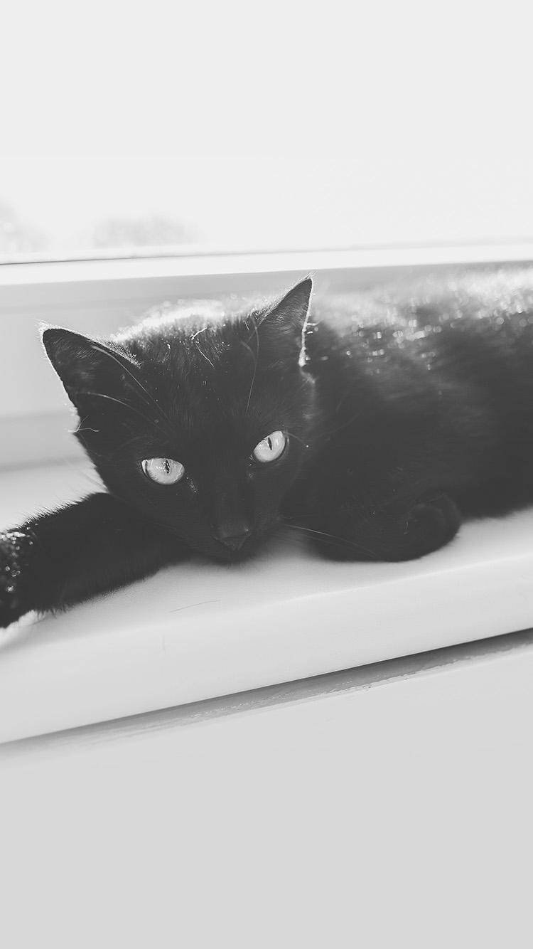 Iphone7papers Mv32 Black Cat Animal Cute Watching