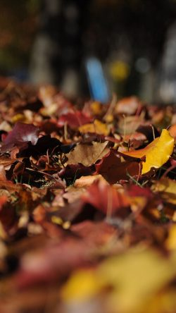 papers.co-nk44-fall-mountain-leaf-brown-bokeh-nature-33-iphone6-wallpaper