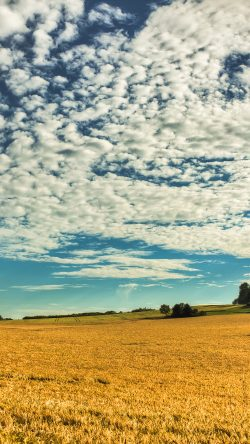 Field under the Clouds