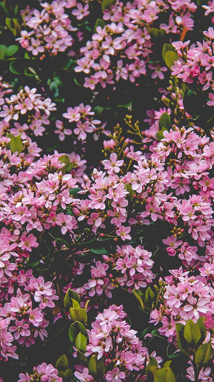 Iphone7paperscom Iphone7 Wallpaper Nv68 Flower Pink