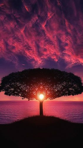 no28-sea-tree-purple-sky-nature