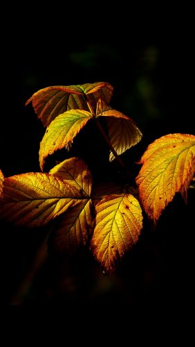 no32-fall-leaf-dark-nature