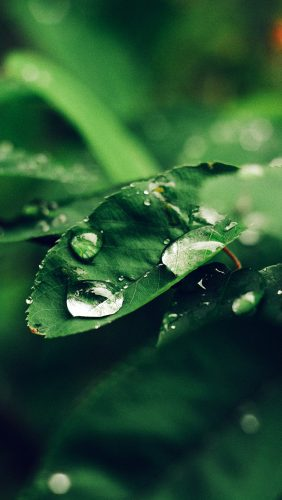 nd38-leaf-rain-green-nature-forest-blue