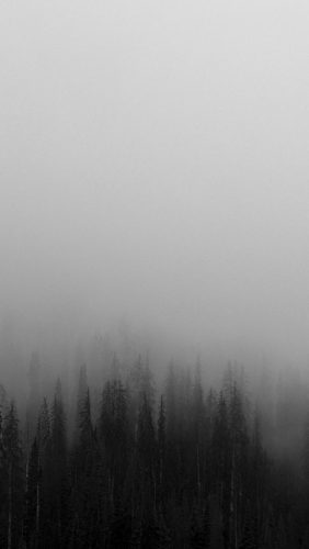 no61-fog-minimal-mountain-wood-nature