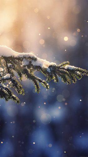 mk28-snowing-tree-blue-christmas-winter-nature-mountain