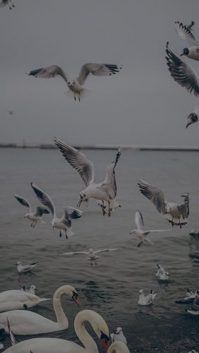 mp69-seagull-sea-beach-port-dark-nature-animal