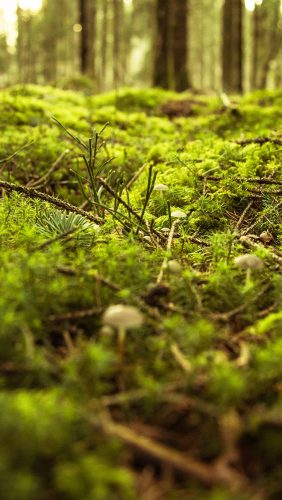 nx82-forest-green-bokeh-mountain-nature