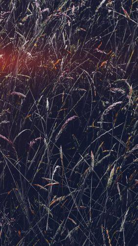 nh91-flower-rye-green-dark-nature-flare-blue